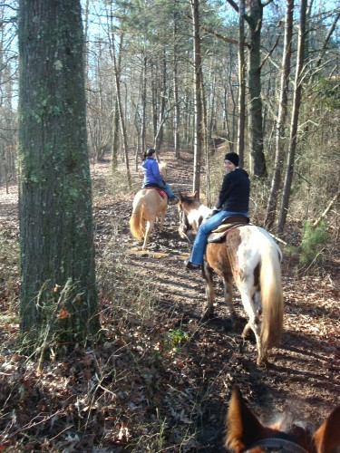 Horseback Riding Through the Forest