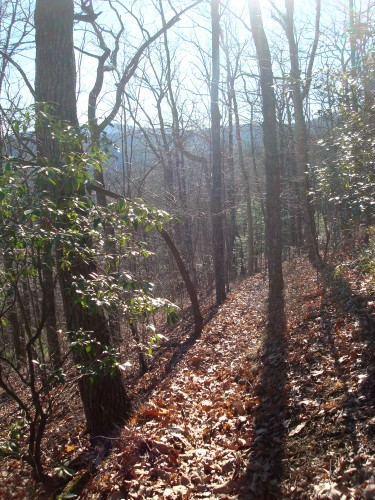 Beautiful Green Mountain Trail